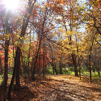 Health Benefits in Nature | Fridley, MN - Official Website